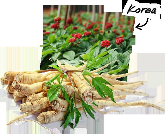 Distributor Jual Obat Kuat Maxiboost Asli Denpasar Kota Bali, jual obat kuat surabaya, jual obat kuat di bandung, jual obat kuat di medan, jual obat kuat terdekat, jual obat kuat makassar, jual obat kuat di bali, jual obat kuat jogja, jual obat kuat di palembang, jual obat kuat di semarang
